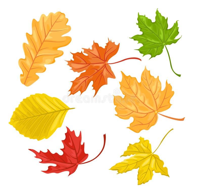 les lames d'automne ont plac? Feuille de chêne, feuilles tombées de hêtre et érable illustration libre de droits
