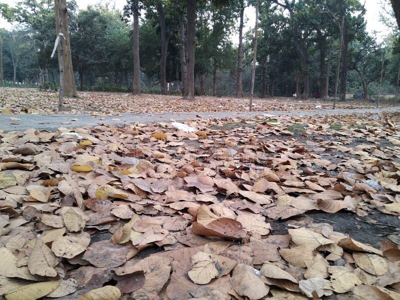 Les lames d'automne tombent image libre de droits