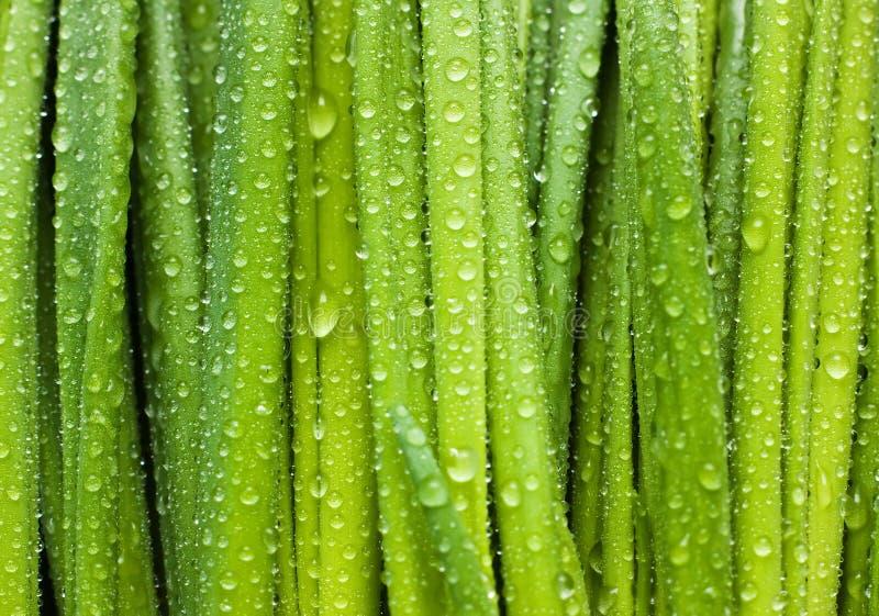 Les lames de vert avec des baisses image libre de droits