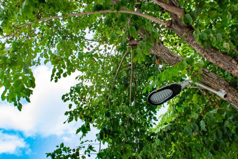 Les lampes sont l'arbre avec le fond de ciel image stock