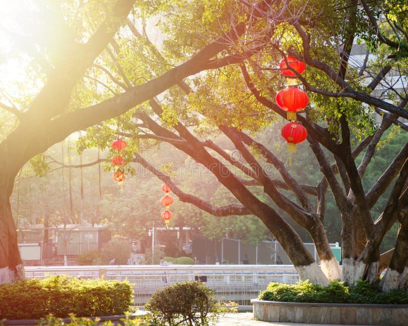 Les lanternes chinoises rouges accrochent sur des branches d'arbre en parc de ville, illuminé par lumière du soleil photographie stock