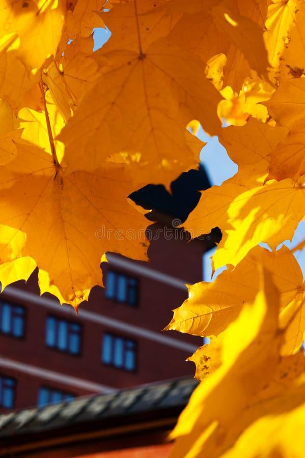 Les leafes d'érable s'approchent de la maison de brique photo libre de droits