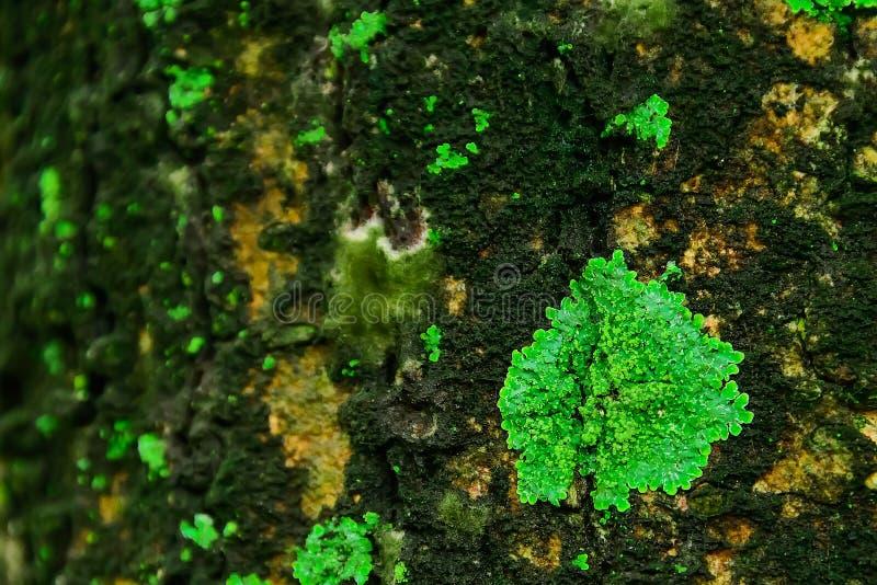 Les lichens se produisent dans les secteurs avec le humidité élevé photo libre de droits