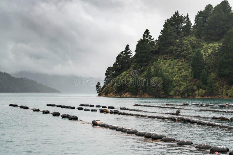 Les lignes des vagabonds de la moule cultivent, le Nouvelle-Zélande photo libre de droits