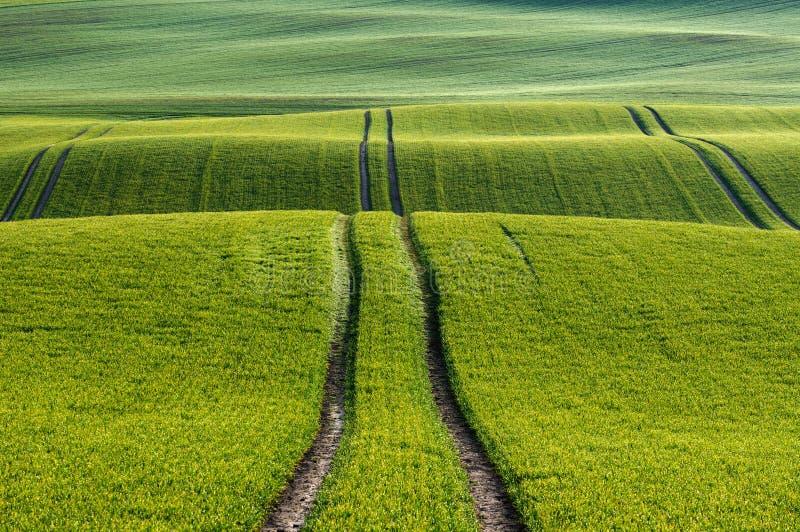 Les lignes et les vagues regardent en détail les champs au printemps images stock