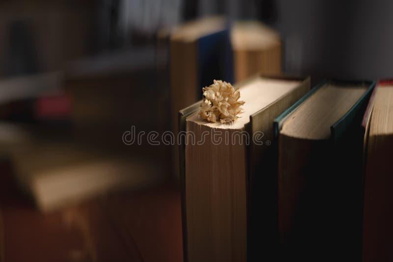 Les livres de cru empilent sur la vieille surface en bois dans la lumière directionnelle chaude image stock