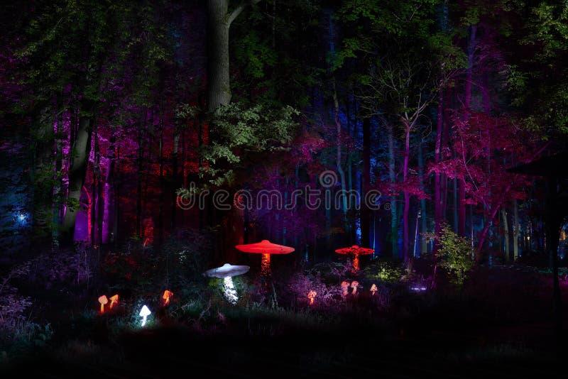 Les lumières de nuit montrent le ` d'inspiration de ` dans le parc de cité-jardin d'Ostankino Centaines de lumières dans la forêt photos stock