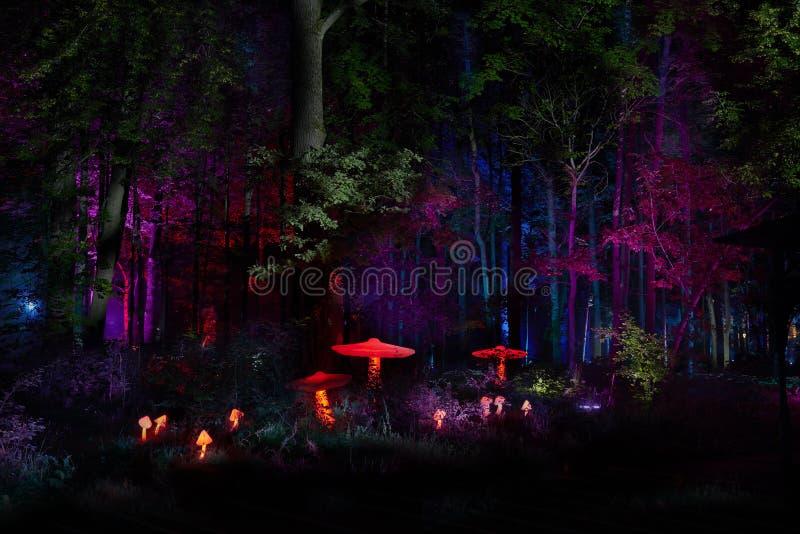Les lumières de nuit montrent le ` d'inspiration de ` dans le parc de cité-jardin d'Ostankino Centaines de lumières dans la forêt photos libres de droits