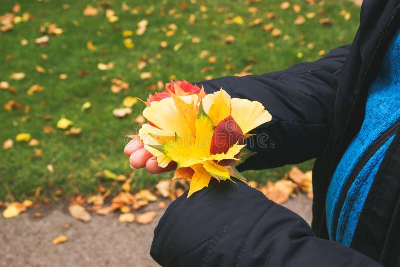 Les mains d'automne en matte image libre de droits