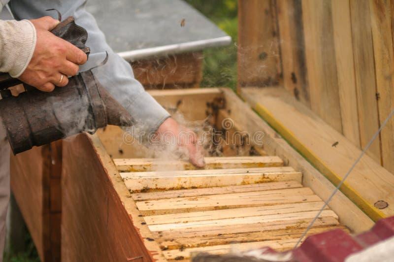 Les mains d'un apiculteur qui fonctionnent dans la ruche image libre de droits