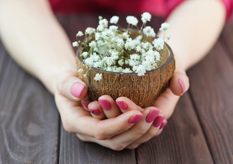 Les mains de femme avec la manucure rose tenant la noix de coco écossent complètement des fleurs image stock