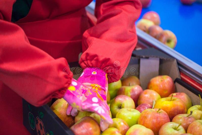 Les mains de l'employé qui a emballé les pommes dans un carton photo stock