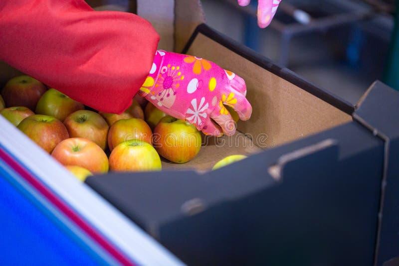 Les mains de l'employé qui a emballé les pommes dans un carton photos stock