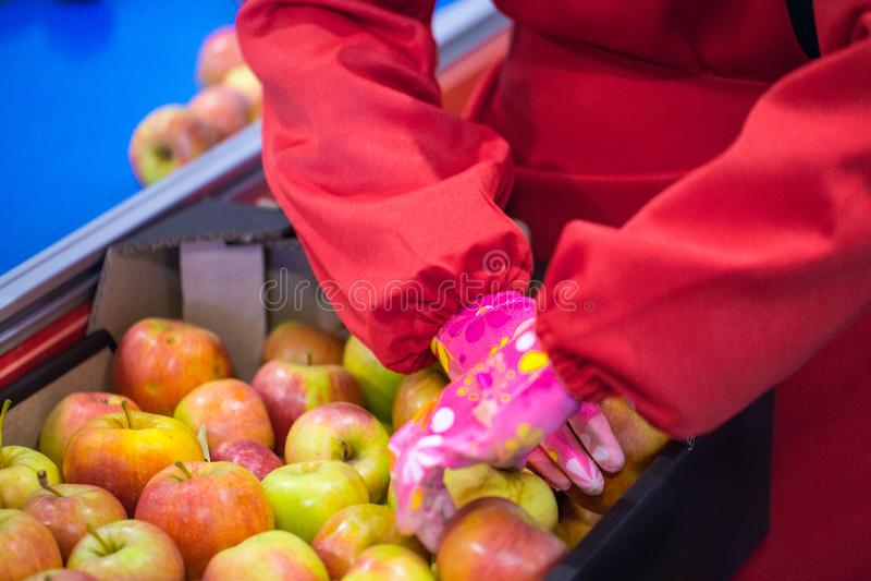 Les mains de l'employé qui a emballé les pommes dans un carton images libres de droits