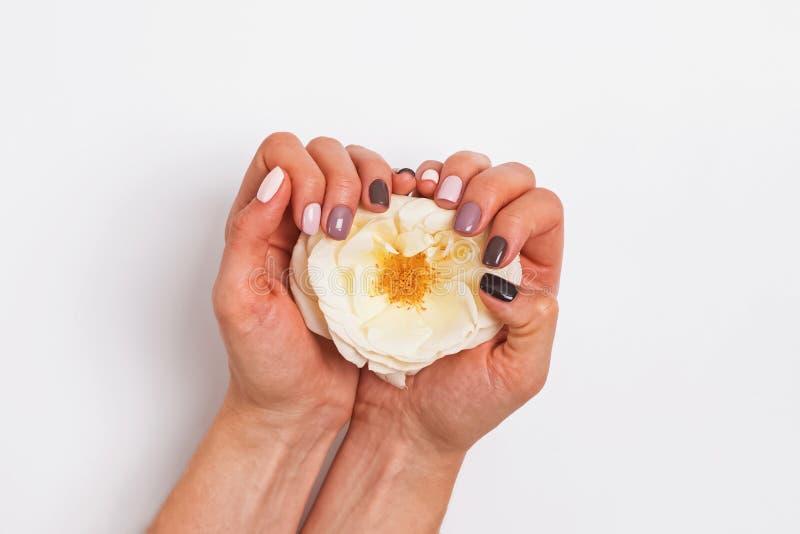 Les mains de la femme avec la belle manucure de salon tenant une fleur rose blanche photos stock