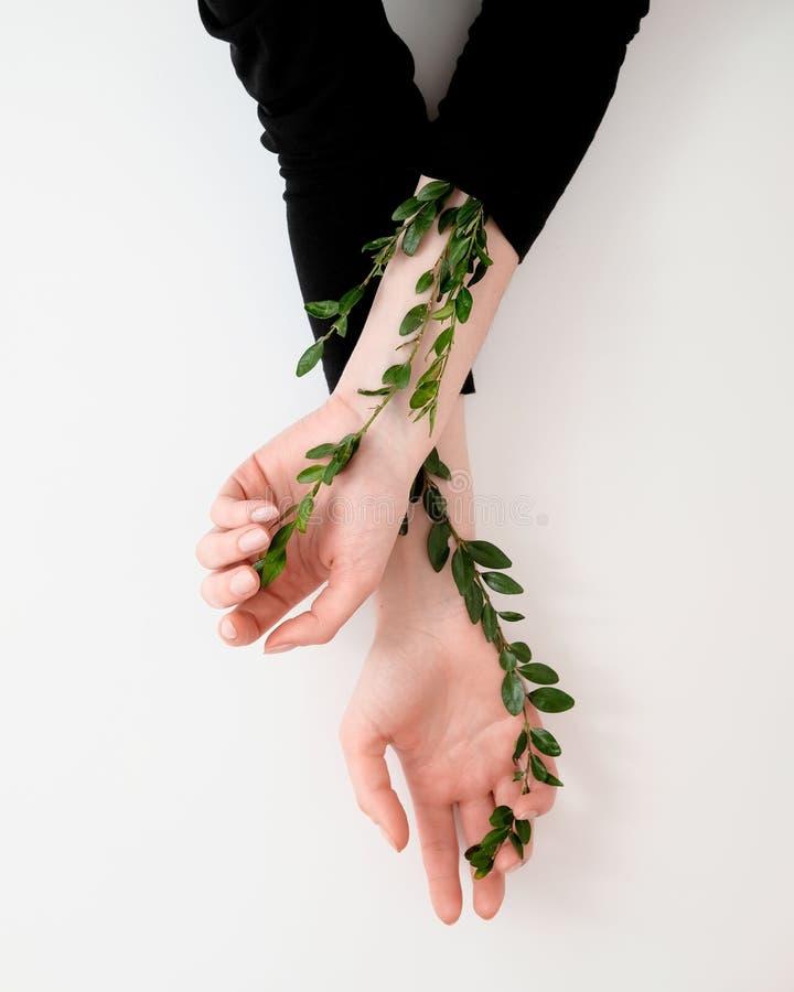 Les mains de la femme bien toilettée avec les feuilles vertes sur la table Cosmétiques pour l'anti ride de mains Beauté, tendress photo libre de droits