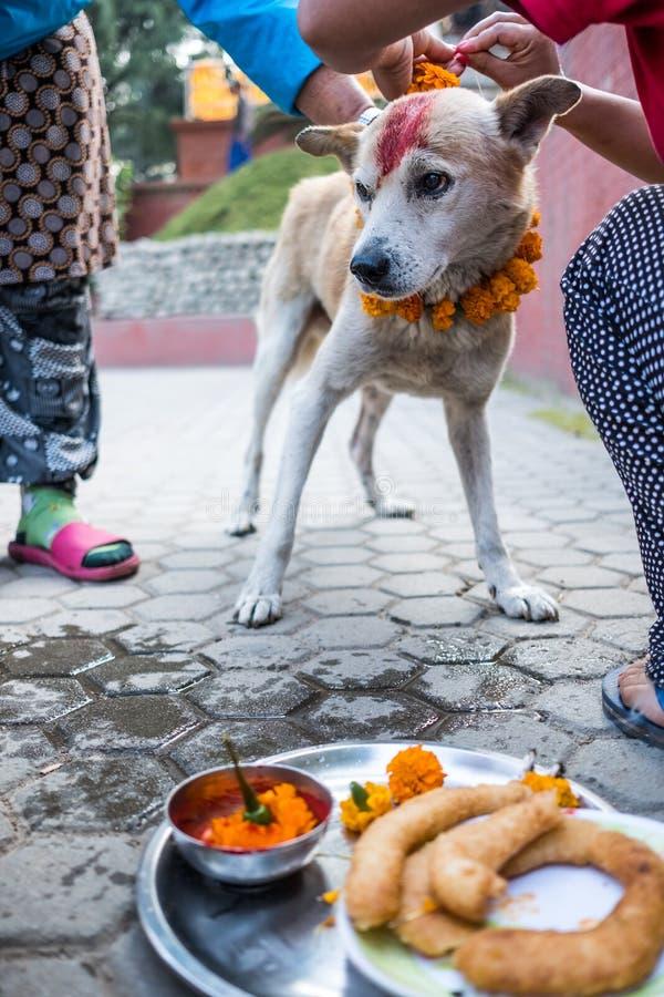 Les mains de la femme ornent le chien pour le festival de Kukur au Népal photo libre de droits