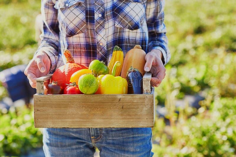 Les mains de la femme tenant la caisse en bois avec les légumes organiques frais photos stock