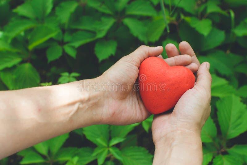 Les mains de la femme tenant le coeur rouge Concept d'amour images stock