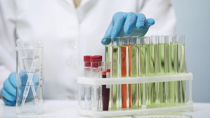 Les mains du docteur prenant le tube à essai, femelle faisant la recherche biomédicale dans le laboratoire photographie stock