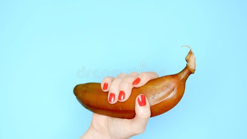Les mains femelles avec les clous rouges tiennent une banane rouge sur un fond bleu photo stock