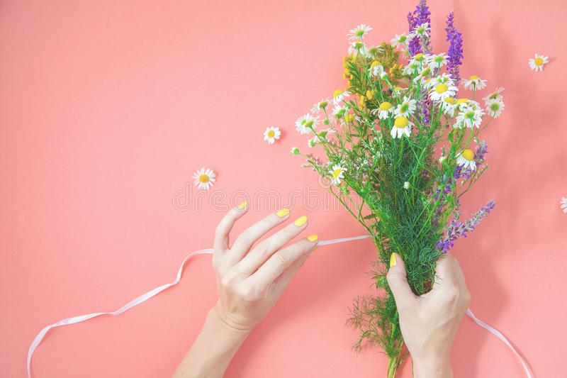 Les mains femelles rassemblent un bouquet des wildflowers sur une vue supérieure de fond d'herbes curatives de l'espace rose de c photo libre de droits