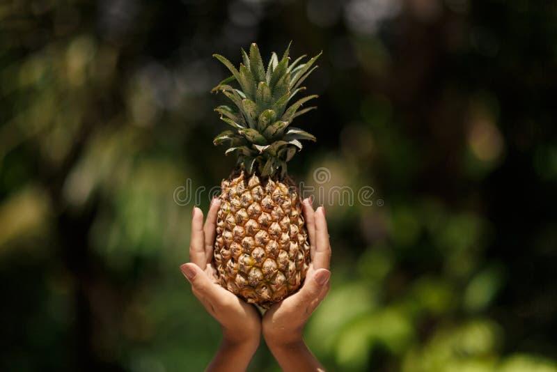 Les mains femelles tient l'ananas sur le fond tropical vert de jungle photo stock