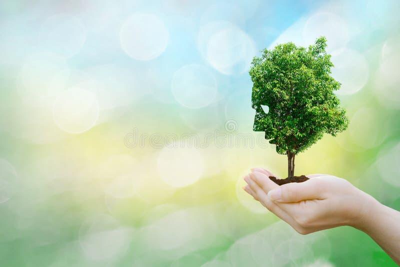 Les mains humaines de concept d'écologie tenant le grand arbre de visage d'usine regardent l'environnement du monde images stock