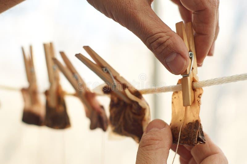 Les mains masculines accrochent les sacs à thé utilisés pour le séchage image stock