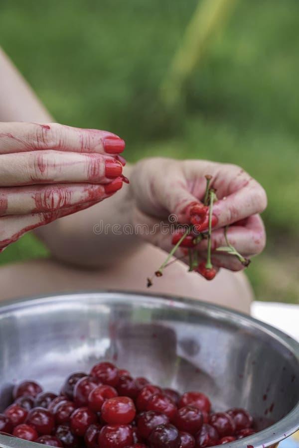 Les mains sarcle des graines de fruit de cerise photos libres de droits