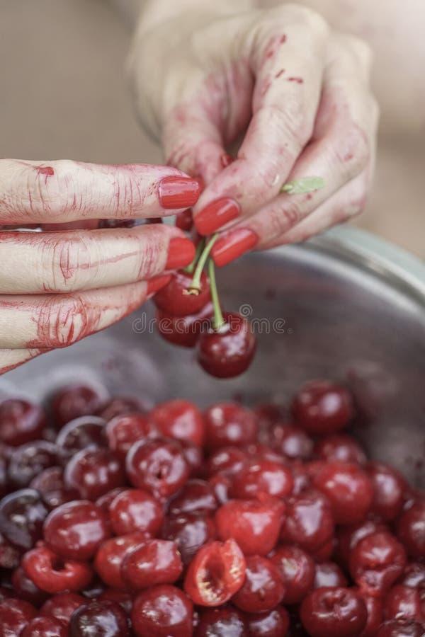 Les mains sarcle des graines de fruit de cerise photo stock