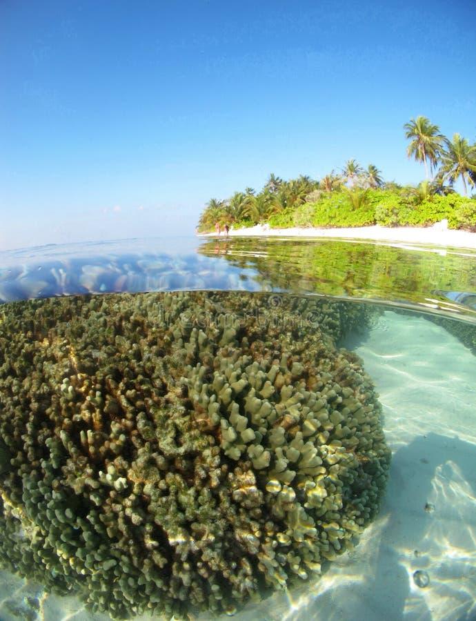 Les Maldives de corail photo libre de droits