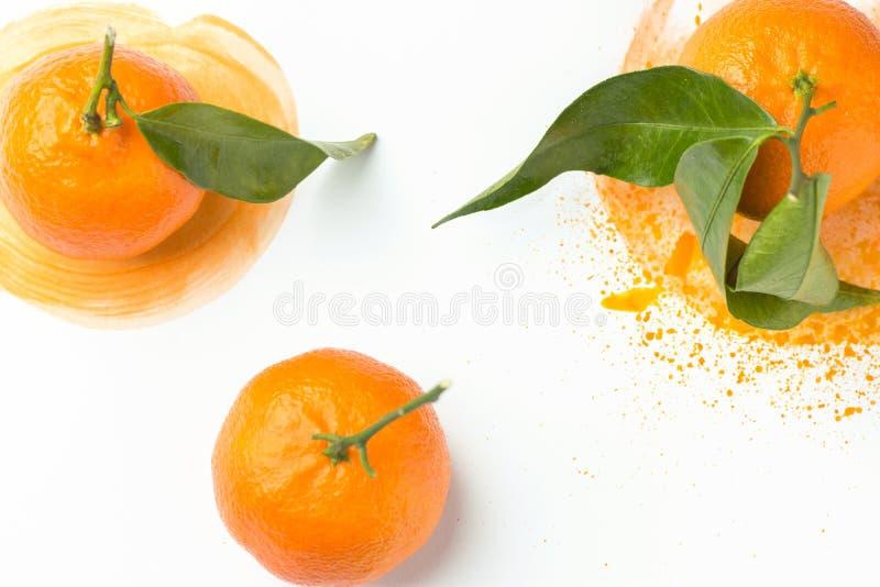 Les mandarines oranges lumineuses crues mûres avec la feuille de vert de tige ont dispersé en main l'aquarelle peinte éclabousse  photos stock