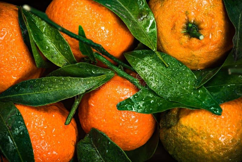 Les mandarines ou les clémentines, se ferment vers le haut de la vue photos libres de droits