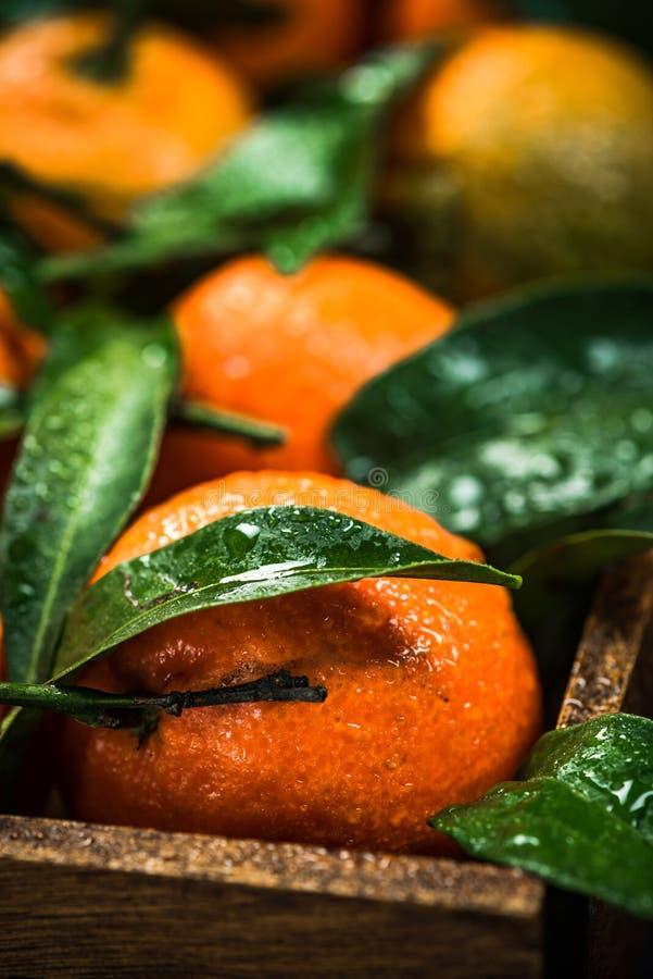 Les mandarines ou les clémentines, se ferment vers le haut de la vue image stock