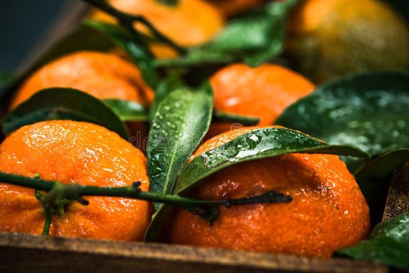 Les mandarines ou les clémentines, se ferment vers le haut de la vue photo libre de droits