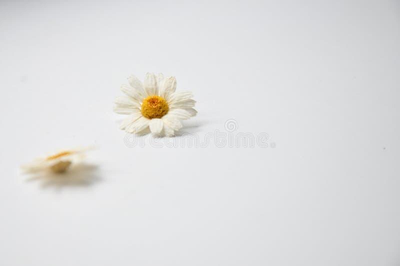 les marguerites se trouvent sur une table blanche photo libre de droits