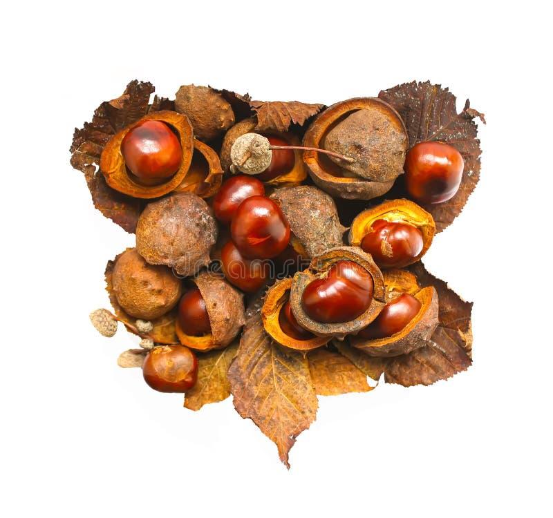 Les marrons d'Inde au coeur forment d'isolement sur le fond blanc Hippocastanum d'Aesculus image libre de droits