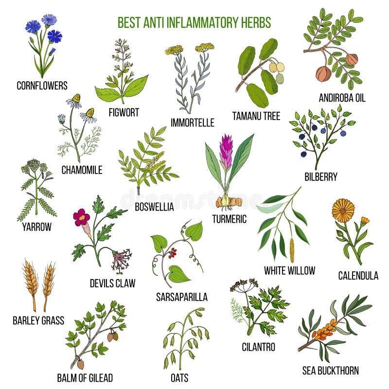 Les meilleures herbes anti-inflammatoires illustration libre de droits
