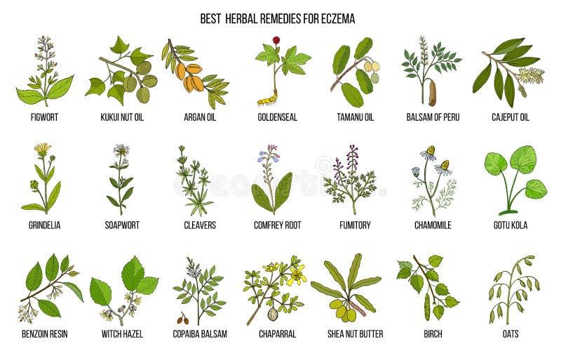 Les meilleures herbes médicinales pour l'eczema illustration stock