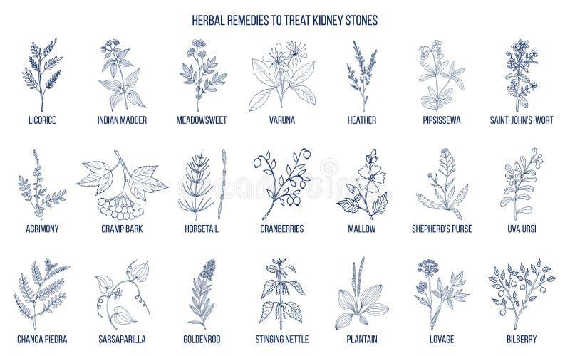 Les meilleures herbes pour la maladie de calcul rénal illustration libre de droits