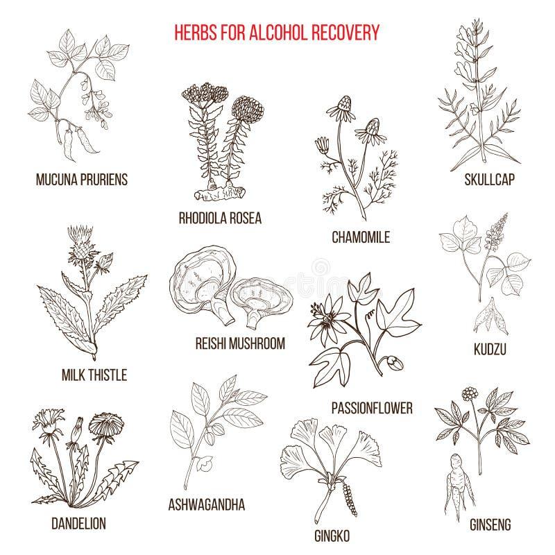 Les meilleures herbes pour la récupération d'alcoolisme illustration libre de droits