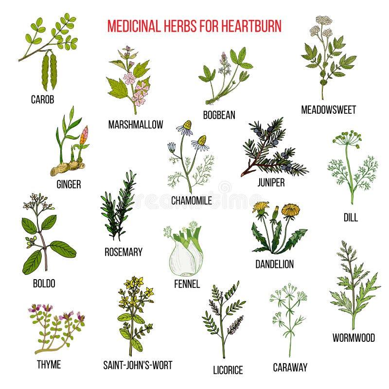 Les meilleurs remèdes de fines herbes pour la brûlure d'estomac illustration libre de droits