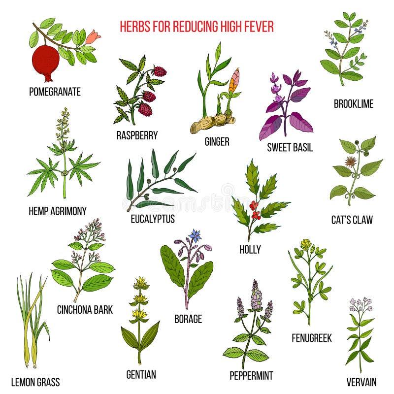 Les meilleurs remèdes de fines herbes pour réduire la grosse fièvre illustration stock