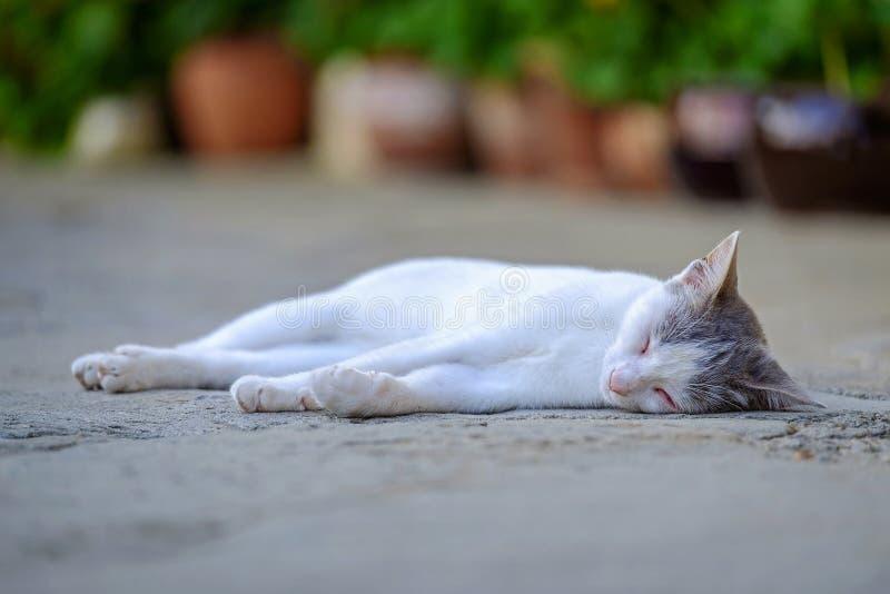 Les mensonges et les repos de chat dans la cour 2 photo libre de droits