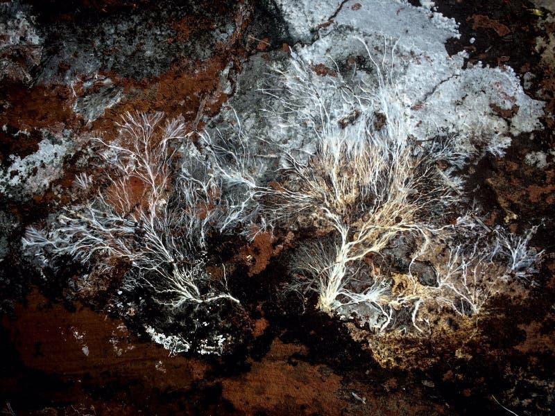 Les micro-organismes sont dans la flore inférieure image libre de droits