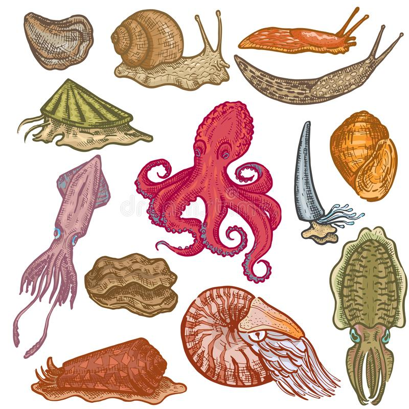 Les mollusques et crustacés dirigent les poulpes animalistic animaux marins de caractère de mollusques de poulpe avec l'escargot  illustration de vecteur