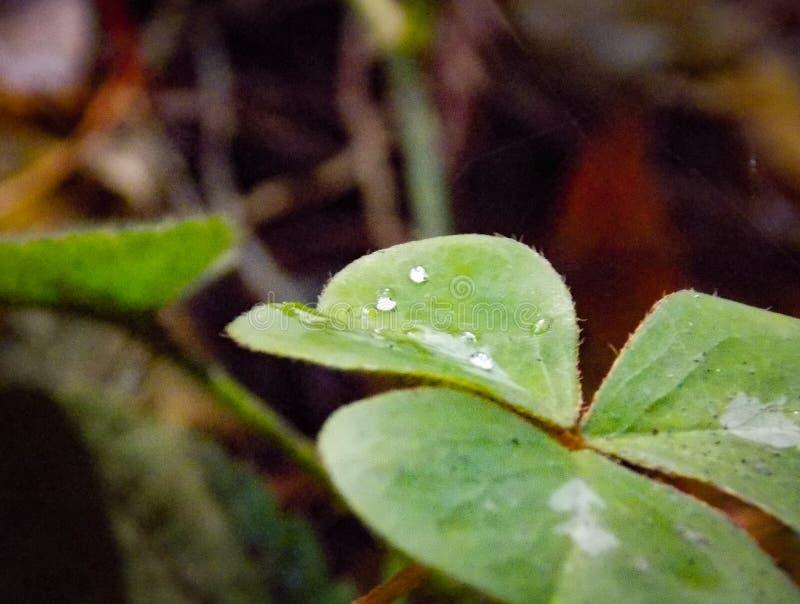 Les moments minuscules sur les forêts photographie stock libre de droits