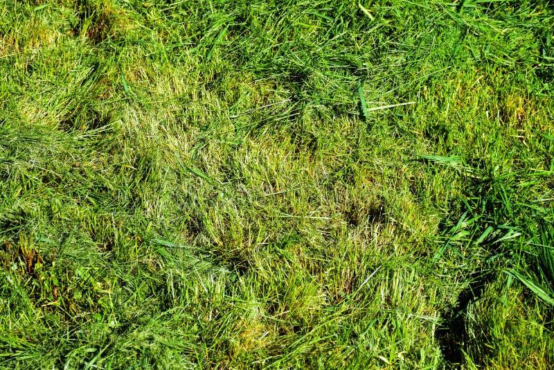 Les moments simples de la vie, travail ordinaire dans le jardin - homme ?quilibrant l'herbe avec le trimmer r?sistant dans le jar photos libres de droits