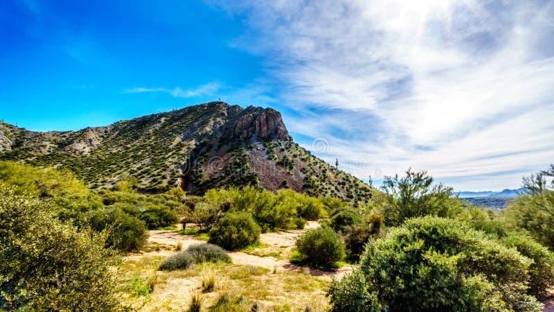 Les montagnes dans le désert aménagent en parc avec ses nombreux cactus de Saguaro et d'autres cactus et arbustes le long de Bart photo libre de droits